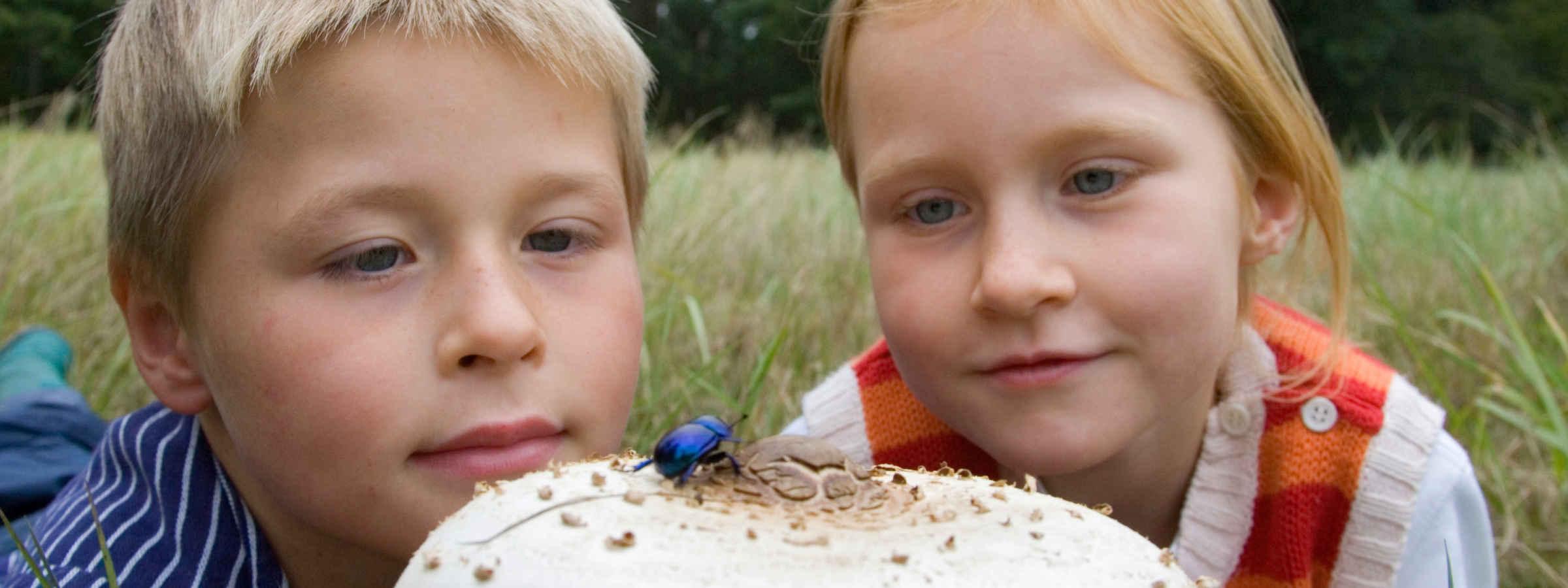 Mädchen und Junge beobachten Käfer