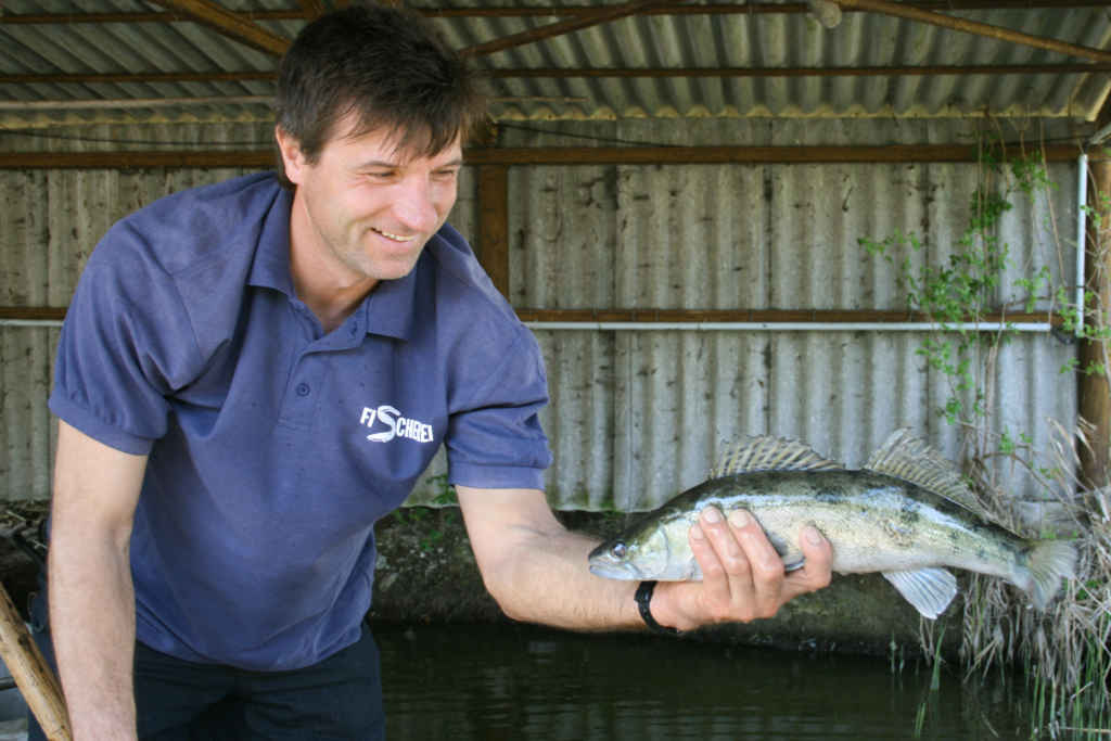 Fischerei Neumann am Galenbecker See